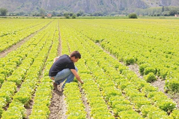 Marco, 27 anni, lavora su campi di sua proprieta' in provincia di Pavia (foto via @Gazzetta commerciale)